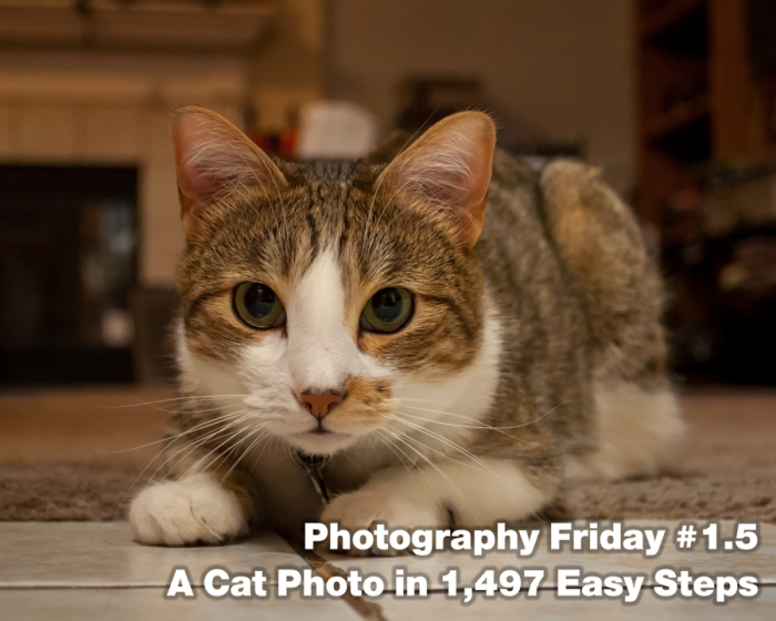 Photography Friday #1.5 – A Cat Photo in 1,497 EasySteps